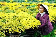 Thăm làng Hoa Sa Đéc dịp Tết