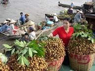 Chương Trình 1 Ngày: Tp. Hồ Chí Minh – Cần Thơ – Chợ Nổi Cái Răng – Chùa Khmer – Chùa Hoa