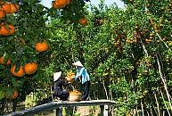 Chương trình 2 Ngày 1 Đêm: Chợ Nổi Cái Răng – Nhà Vườn Trái Cây – KDL Mỹ Khánh – Chùa Hoa – Chùa Khmer